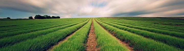 farm-land